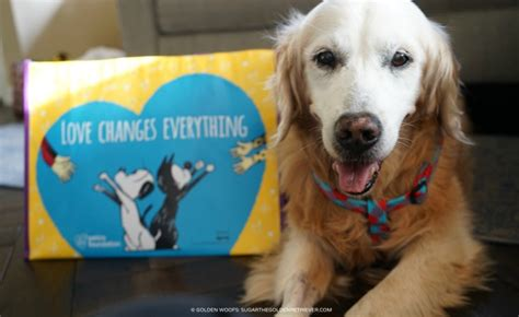 golden retriever petco petco foundation changes everything golden woofs