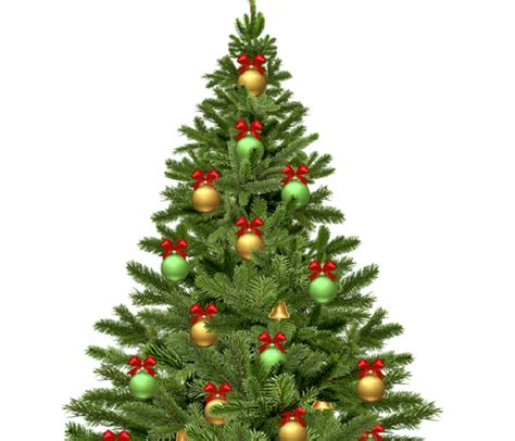 collection of cheap live christmas trees best christmas