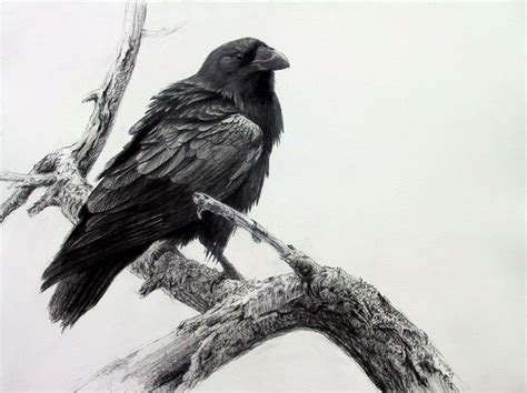 dsc gallery of canadian drawing masters