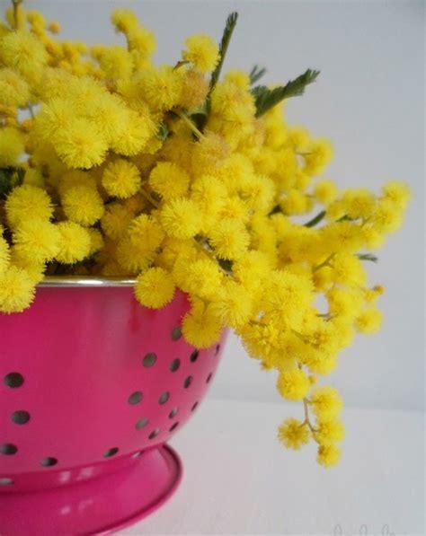 mi nueva cocina en mi cocina hoy lalole mimosas en mi nueva mesa de cocina