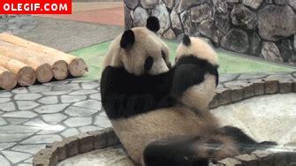 gifs de amor graciosos gif el amor de un panda por su madre gif 306