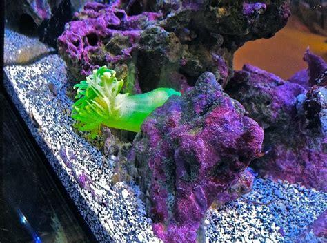 best fan for aquarium 60 best images about ecoxotic ecopico aquarium on
