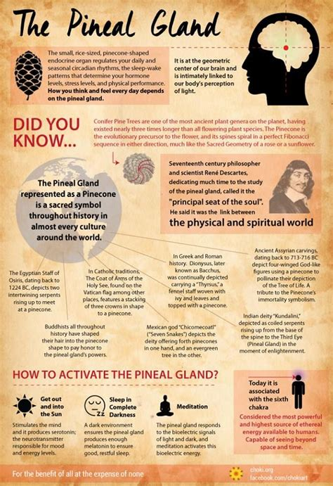 Detox Pineal Gland Borax by 40 Best Pineal Gland Images On Health
