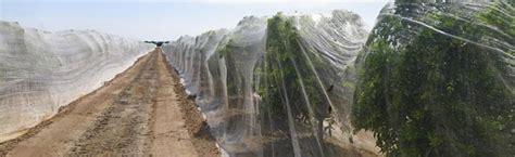 fruit tree netting smart net systems industrial
