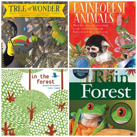 rainforest picture books rainforest jungle books for preschoolers