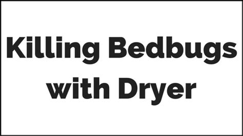 does the dryer kill bed bugs how to kill bed bugs with dryer everything you want to know