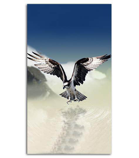 eagle hd wallpaper   mobile phone spliffmobile