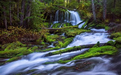 fast mountain river waterfall pine forest fallen trees