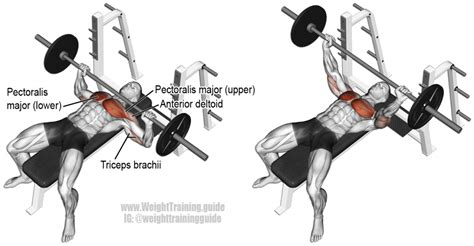 barbell bench presses barbell bench press exercise instructions and video