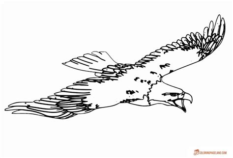 sea eagle coloring page coloring pages about love a pack of eagle pictures sea