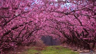 Beautiful Spring by Beautiful Spring Wallpapers Wallpaper Cave