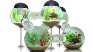 id 233 e d 233 co pour aquarium pas cher