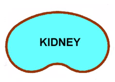 kidney shape swimming pool shapes a basic guideline to various pool
