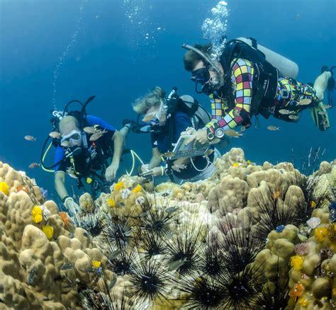 Padi Course idc koh tao padi underwater naturalist instructor courses