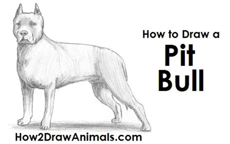 how to a puppy pitbull how to draw a bull step by step breeds picture