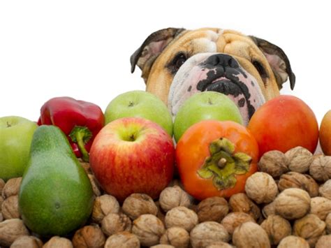 are avocados poisonous to dogs things that are poisonous to your healthy living indiatimes