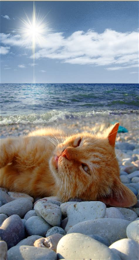 Sea Of Cats are you april fool proof world s best cat litter