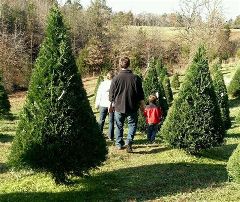 top rated christmas tree farm in kansas city 13 magical tree farms in south carolina