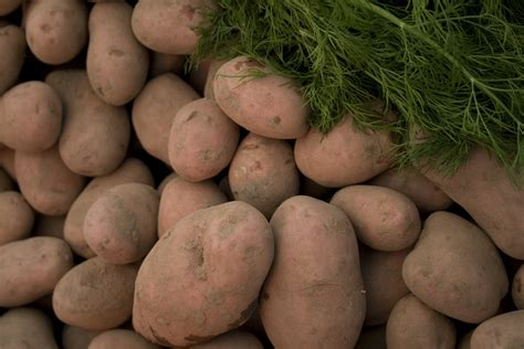 8 vegetables in free vegetables 8 stock photo freeimages