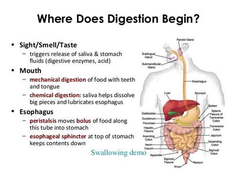 protein digestion begins in the ecgs module 13