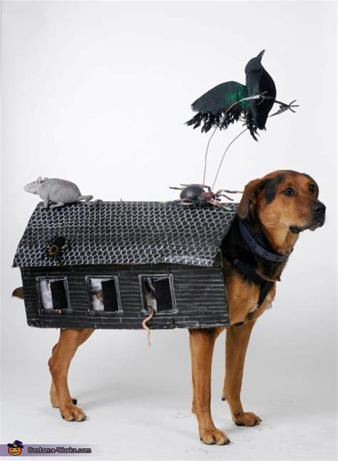 haunted dog house haunted house dog costume