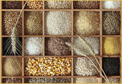 whole grains nutritional value funfood16 the nutritional value of grains