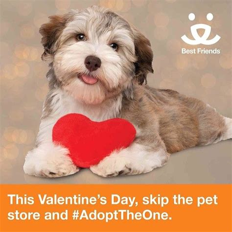best friends animal society 17 best images about 2014 s day nonprofit