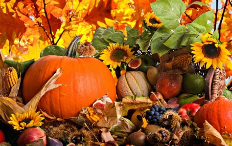 harvest background fall harvest widescreen background wallpapers 3782