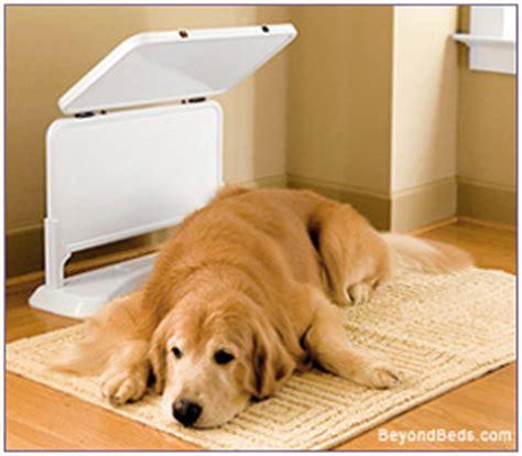 fauna sauna improve  health   sick  injured dog