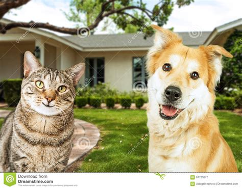 happy dog house happy dog and cat in front of house stock photo image 67723077