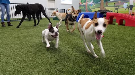 Doggie Day Care Murder pered pups free range bark city day care center