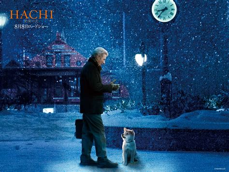 hachiko a s story hachiko a s story images hachiko a s story hd wallpaper and background photos