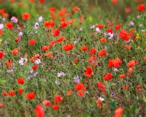 meadow wildflowers photo collage backgrounds pinterest