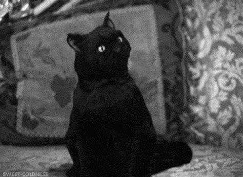 Cat Salem salem the cat on