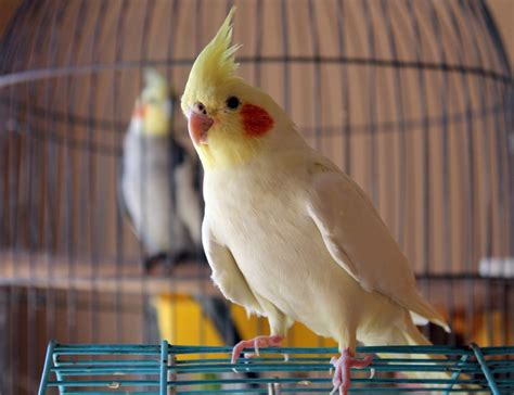 how to a bird puppy beginner s guide to pet birds and parrots