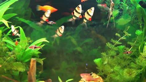 Poisson Exotique Pour Aquarium by Aquarium Hd Aquarium D Eau Douce Poissons Exotiques D