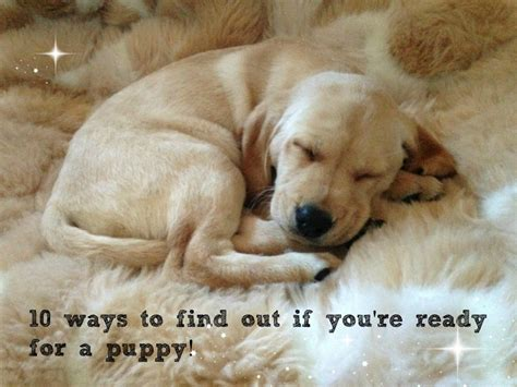 10 Ways To Find Out If Hes by 10 Ways To Find Out If You Re Ready For A Puppy