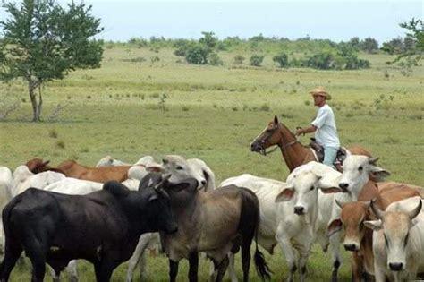 imagenes de paisajes ganaderos cr 237 menes contra ganaderos aumento en 2014 en diferentes