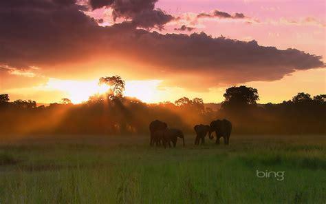 herd  elephants masai mara national reserve kenya hd