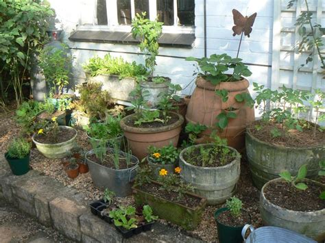 container herb garden garden ideas