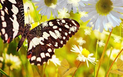 imagenes mariposas bellas hermosas mariposas im 225 genes taringa