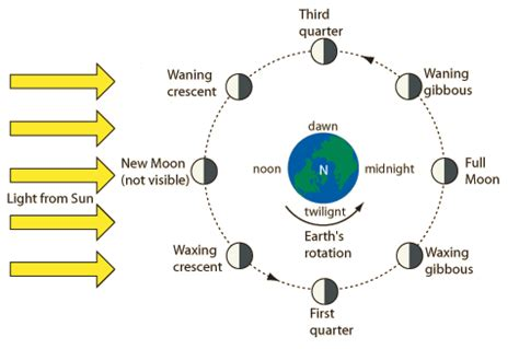 phases of the moon diagram for phases of the moon