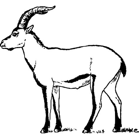 how to draw new year goat file portuguese ibex cabrera goat svg