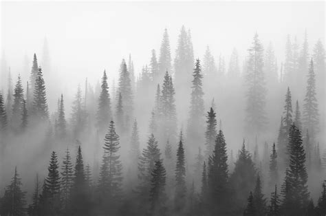 black and white forest black and white wall mural forest grey