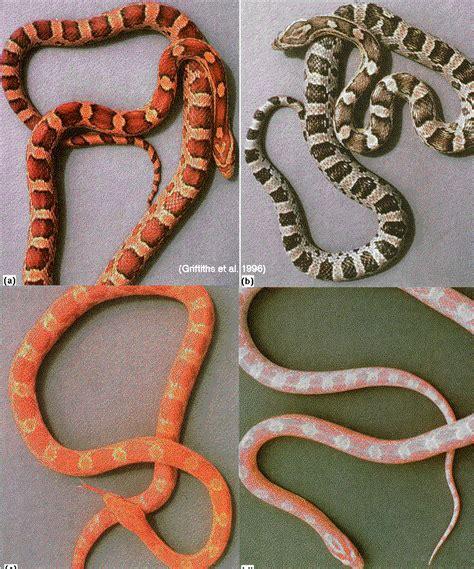 Eliquid Taste Like Ooze All Variant medicinal animal organs strange true facts strange