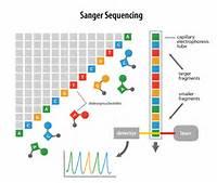 Next Generation Sequencing NGS Sanger Illustrationpng