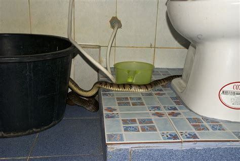 snake in bathroom koh samet thailand there s a snake in my bathroom
