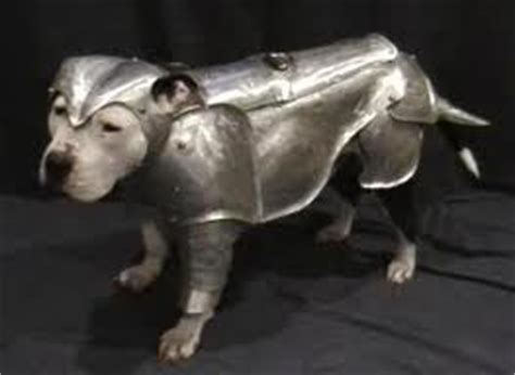 spanish war dogs edible dogs of the conquistadors and