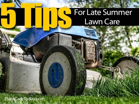 summer lawn care tips 5 tips for late summer lawn care