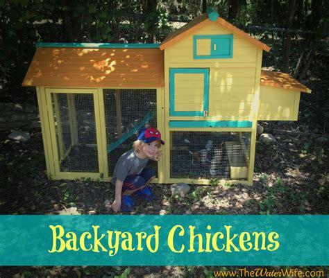 Backyard Chicken Farm Update The Water Wife Backyard Chicken Farmer